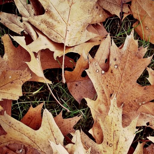 Autumn Wallpapers (Halloween Orange Wallpaper)