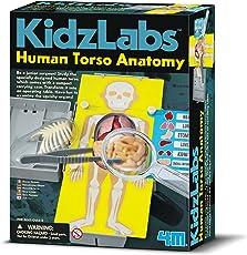 4M Human Torso Anatomy, Multi Color