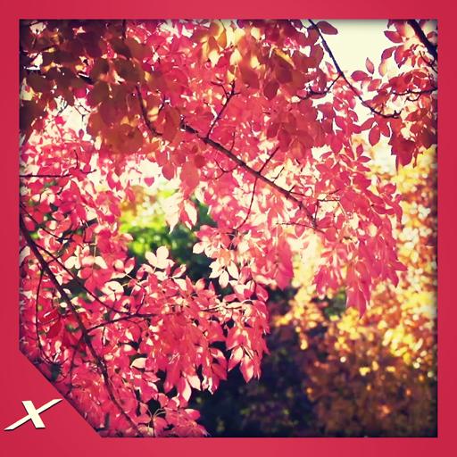 Autumn leaves rattle
