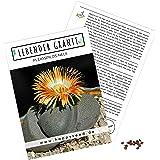Exotische Kakteen Samen mit hoher Keimrate - Sukkulenten Samen Set für deinen eigenen wunderschön blühenden Kaktus (1x…