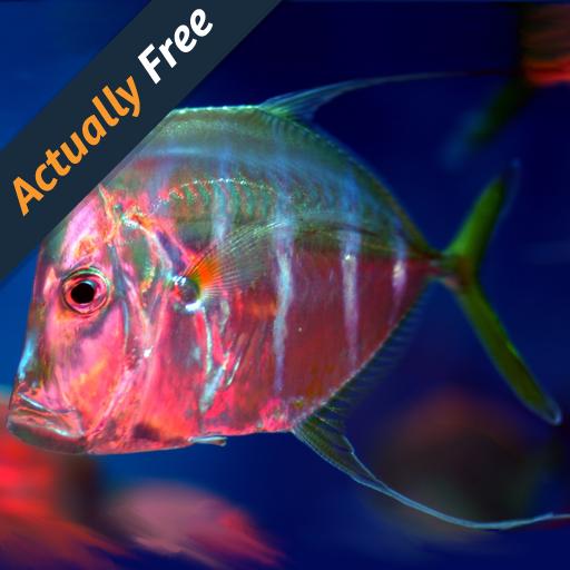 pesce-acquario-marino