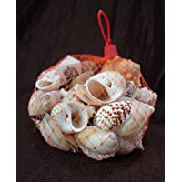 STE Natural SEA Shell for Home DÉCOR & Aquarium Pack of 65 PCS Approx