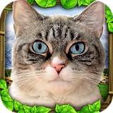 Stray Cat Simulator
