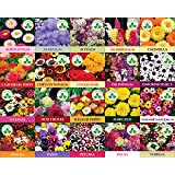 ONLY FOR ORGANIC 20 Winter Flower Seeds (4800 + Seeds) with Cocopeat Block and Instruction Manual
