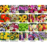 Aero Seeds Combo Of 640+ Seeds 20 Varieties of Flower Seeds For Your Garden Beautiful Bloom Germination Seeds