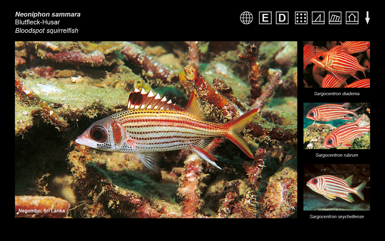 RED SEA MAX D USER MANUAL Pdf Download