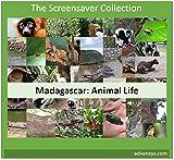 Madagascar: Animal Life Screensaver [Téléchargement]
