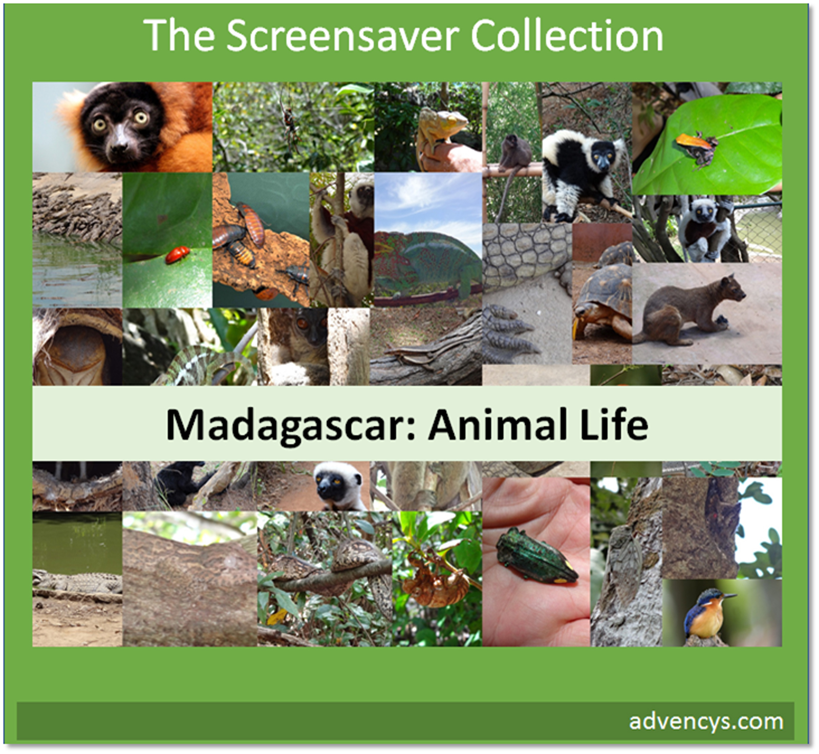 madagascar-animal-life-screensaver-telechargement