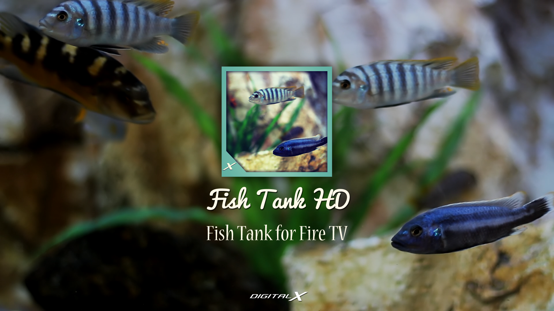 Fish tank hd fish tank for fire tv apps f r for Fish tank app
