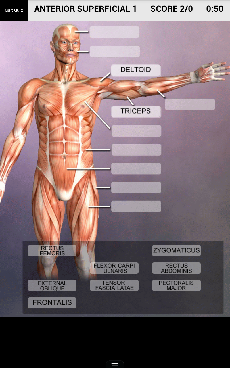 Muscle And Bone Anatomy 3d Amazon Apps Fr Android