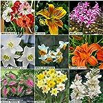Kraft Seeds Gate Garden Summer Flower Bulbs/Seeds (Multicolour, 9 Pieces)