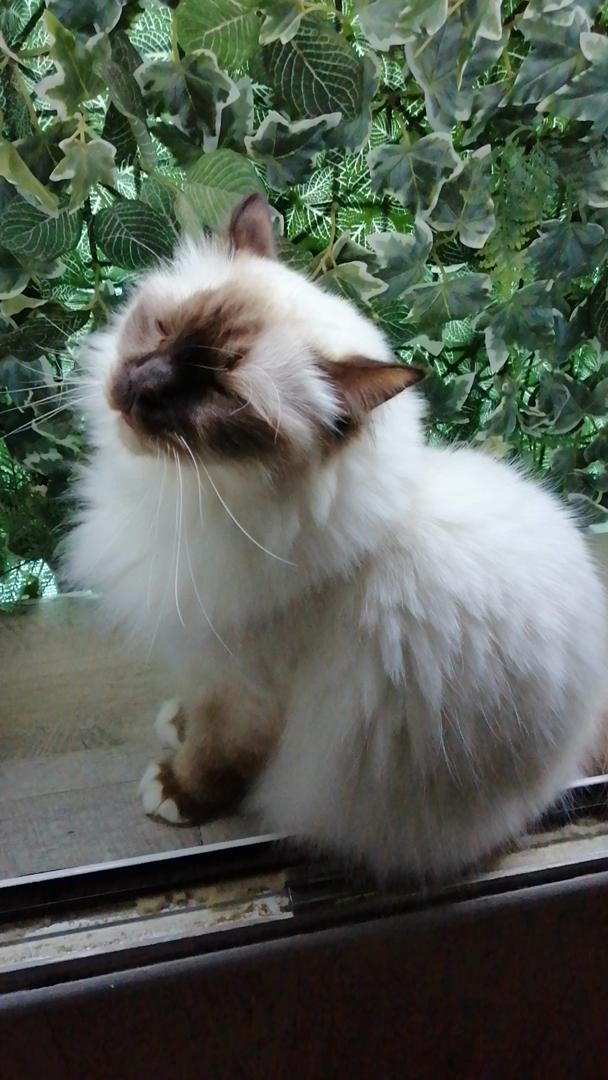 CaniComplete Relajantes para Gatos, Perros, Mascotas Glóbulos de Flores de Bach - Tranquilizante Natural para El Miedo y el Estrés - Pet Remedy: Amazon.es: Productos para mascotas