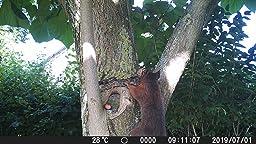 le scoutisme Bobotron Cam/éra de chasse 12 MP PIR Vision nocturne /Étanche Pour la maison la chasse la faune le jardin
