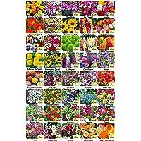 Aero Seeds 40 Varieties of Flower 2050+ Seeds Combo For Your Garden Beautiful Bloom Germination Seeds.