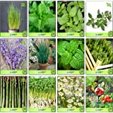 Creative Farmer Seeds Of Herbs Herb Seeds Combo Pack