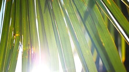 smardy 72mm Close Up Macro Filtro Ideal para Primeros Planos y macrofotograf/ía de peque/ños Objetos Incluye pr/áctica Caja de Transporte 2 dioptr/ías Lente de Cristal Lupa de aproximaci/ón