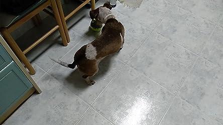 Alimentador de Comida para Perros, Yokunat Bola de Tratamiento IQ Rompecabezas Juguetes Interactivos Educativos Dispensadora de Comida con Ajuste de Dificultad para Mascotas Pequeños y Medianos: Amazon.es: Productos para mascotas