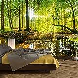 murimage Papel Pintado Bosque 366 x 254 cm Incluyendo Pegamento Fotomurales Vista 3D Madera árboles luz del Sol Sala Living O