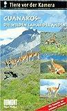 Tiere vor der Kamera: Guanakos, die wilden Lamas der Anden