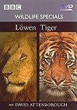 03 - Löwen / Tiger