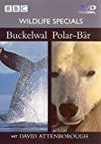 Wildlife Specials 04 - Buckelwahl / Polar-Bär