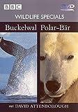 04 - Buckelwahl / Polar-Bär