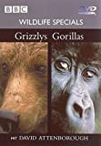05 - Grizzlys / Gorillas