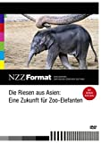 NZZ Format: Die Riesen aus Asien - Eine Zukunft für Zoo-Elefanten