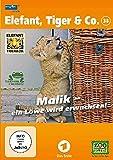 Elefant, Tiger & Co. - Teil 38: Malik - ein Löwe wird erwachsen! (2 DVDs)