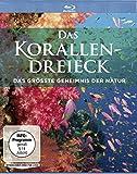 Das Korallendreieck - Das größte Geheimnis der Natur [Blu-ray]