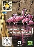 Elefant, Tiger & Co. - Teil 42: Haidewitzka, die Wanne ist voll (2 DVDs)