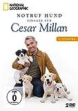 Notruf Hund - Einsatz für Cesar Millan: Staffel 3 (2 DVDs)