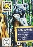 Teil 44: Mathe für Koalas (2 DVDs)