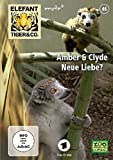 Elefant, Tiger & Co. - Teil 46: Amber & Clyde - Neue Liebe