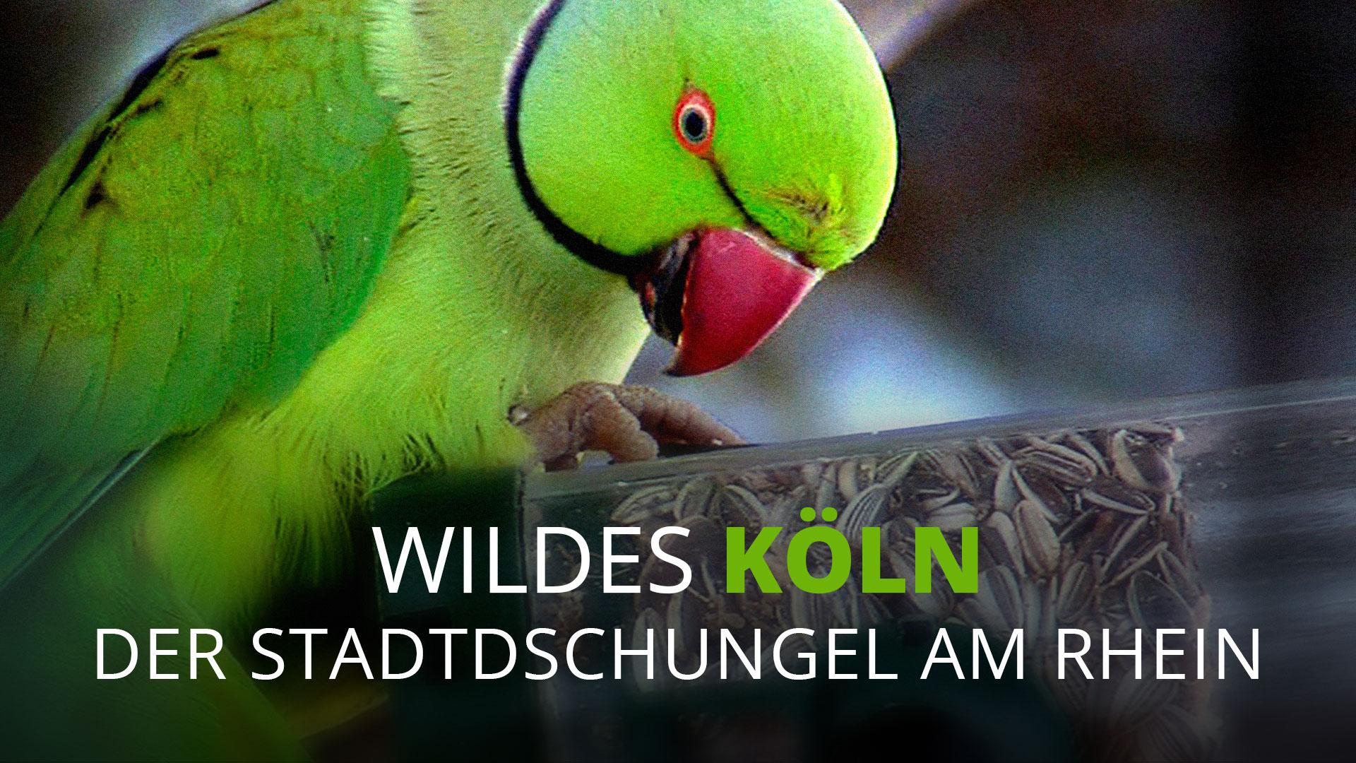 Wildes Köln: Der Stadtdschungel am Rhein