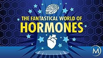 The Fantastical World of Hormones